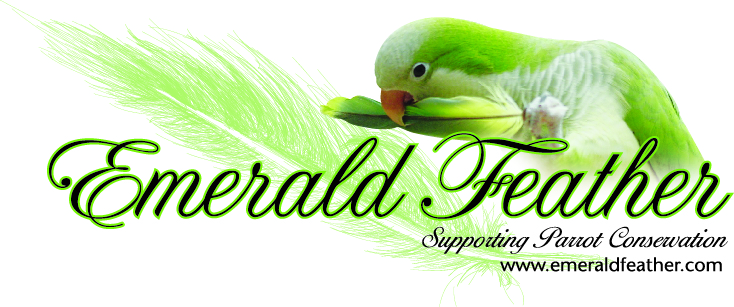 Emerald Feather logo jpeg