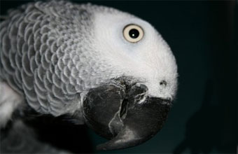 fight ABV be ABV free! The new PDD CAMPAIGN | Canadian Parrot Conference
